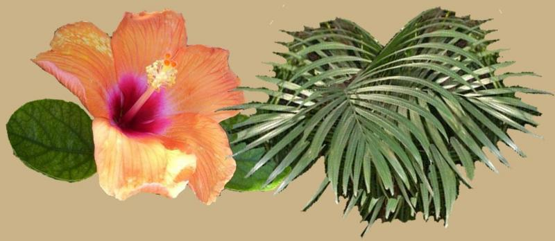 Hibiscus and Thai Palm