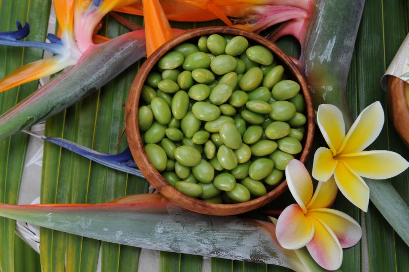 paradise candles of hawaii soy beans